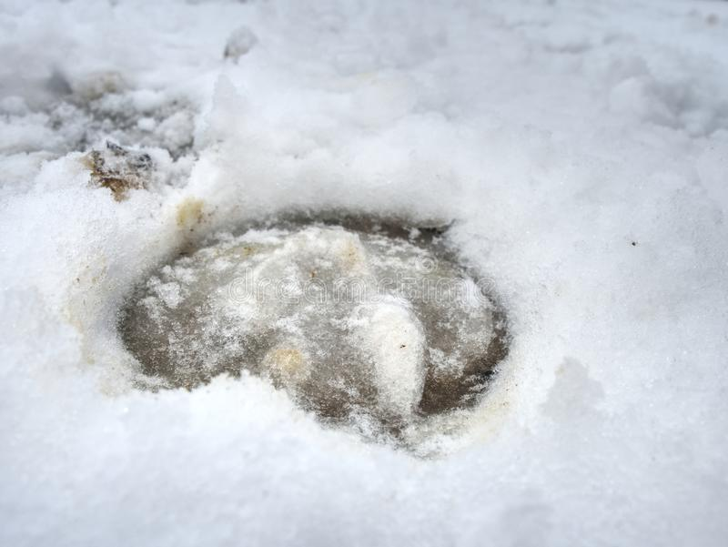 Lerigt hästklövtryck i hal snö royaltyfria bilder