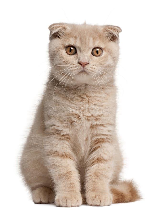 Les écossais plient le chaton, 1 mois, se reposant devant le Ba blanc image libre de droits