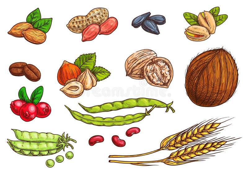 Les écrous, grain, baies dirigent des éléments de croquis illustration libre de droits