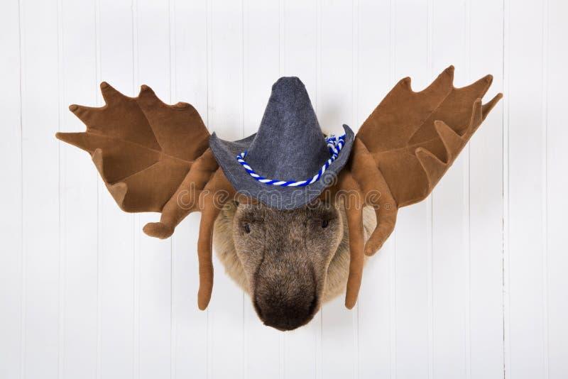 Les élans se dirigent avec des andouillers et un chapeau bavarois de feutre blanc avec le wh bleu images stock