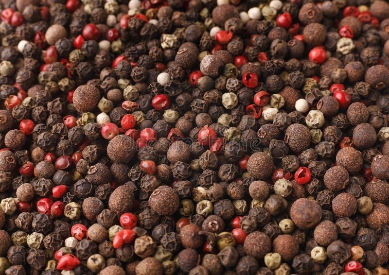 Les épices organiques mélangent le concept photo stock