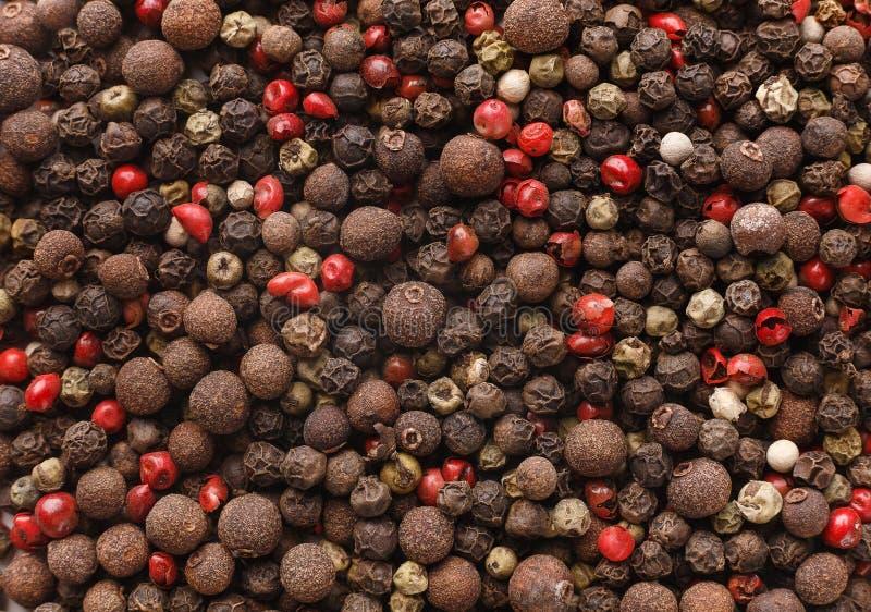 Les épices organiques mélangent le concept photographie stock libre de droits