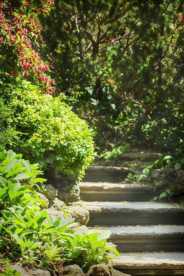 Les étapes en pierre naturelles et le chemin en bel été font du jardinage photo stock