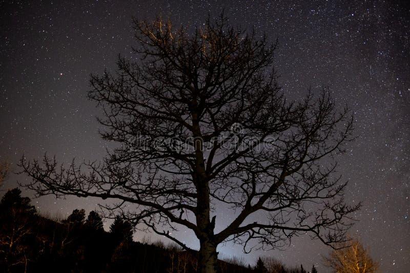 Les étoiles brillent derrière un arbre de tremble en hiver photos stock