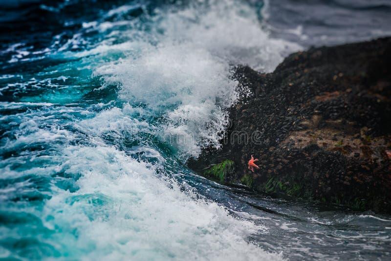Les étoiles de mer et la vague