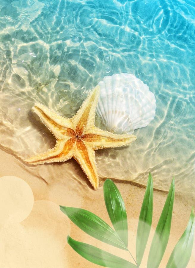 Les étoiles de mer et le coquillage l'été échouent en eau de mer images stock
