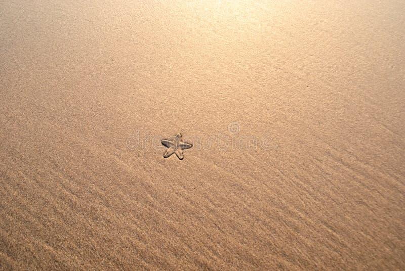 Les étoiles de mer l'été échouent en eau de mer images libres de droits