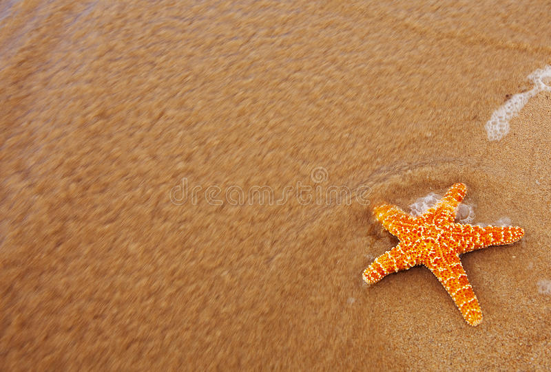 les étoiles de mer ont rincé de l'océan photos stock