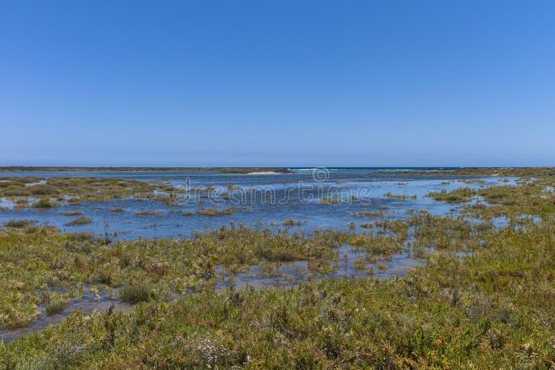 Les Îles Canaries de prés de sel image stock
