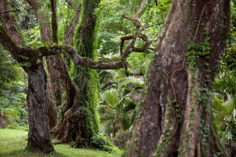 Les Îles Maurice image stock