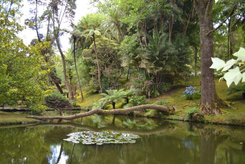Les Açores, Furnas image libre de droits