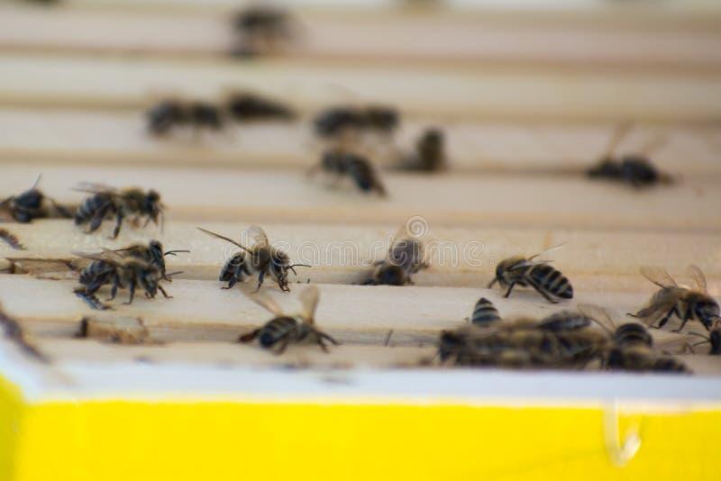 Les abeilles à l'intérieur d'une ruche dans le domaine photo libre de droits