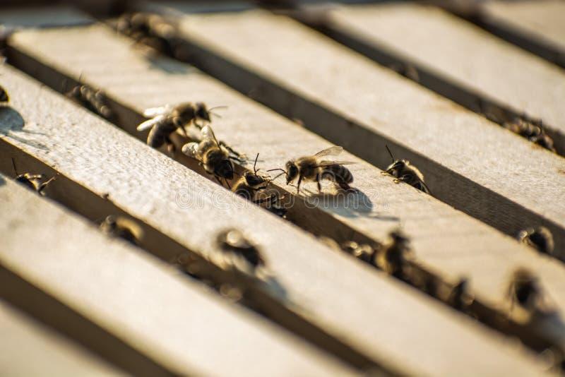 Les abeilles à l'intérieur d'une ruche dans le domaine image libre de droits