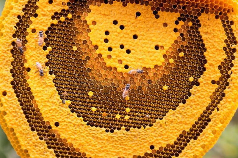 Download Les Abeilles De Travail Sur Le Nid D'abeilles Photo stock - Image du lifestyle, manger: 87708828