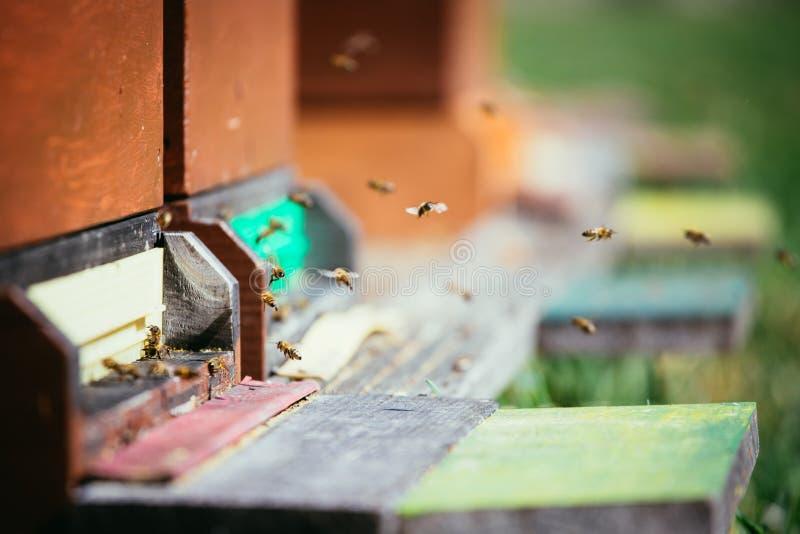 Les abeilles s'amassent : Vol aux conseils de débarquement photographie stock