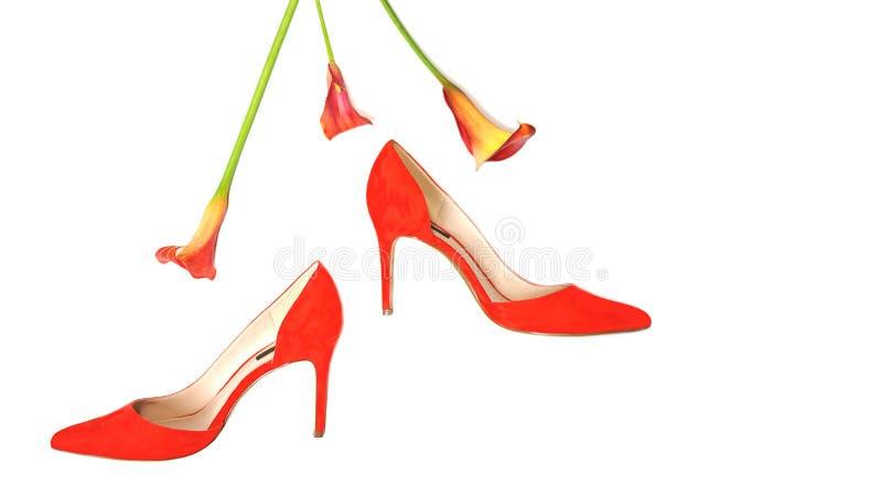 Les accessoires ?l?gants femelles fa?onnent l'?quipement de luxe r?gl? : chaussures et fleurs rouges ? l'arri?re-plan blanc de co photos libres de droits