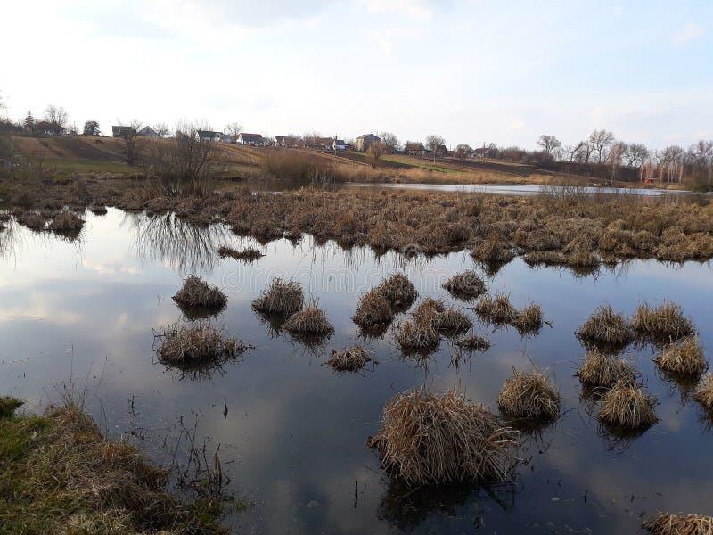Les accumulations de l'herbe sèche en rivière marécageuse photo stock
