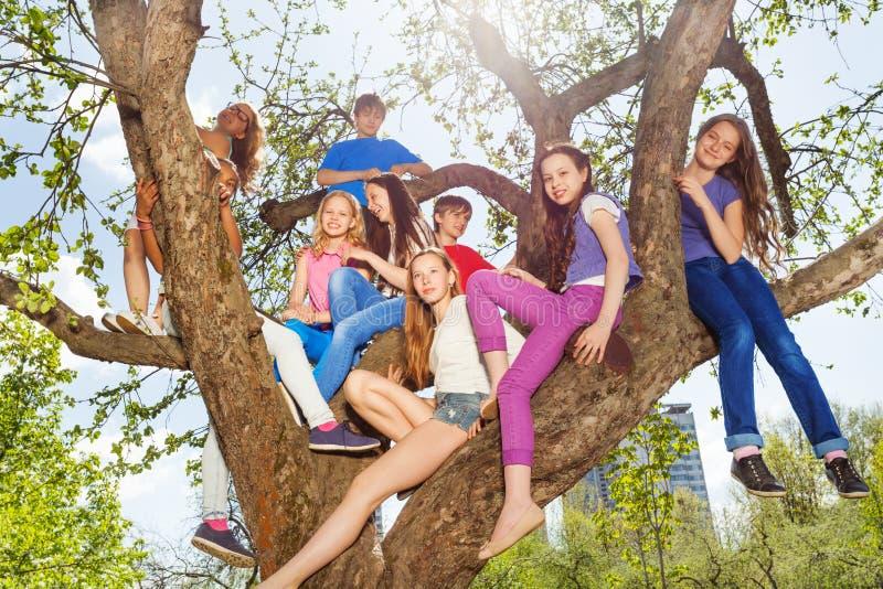 Les adolescents s'asseyent ensemble sur des bancs d'arbre en parc photos libres de droits