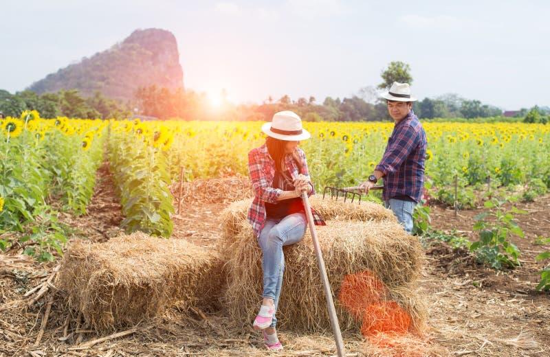 Les agriculteurs équipent et des femmes travaillant dans un domaine des tournesols photo stock