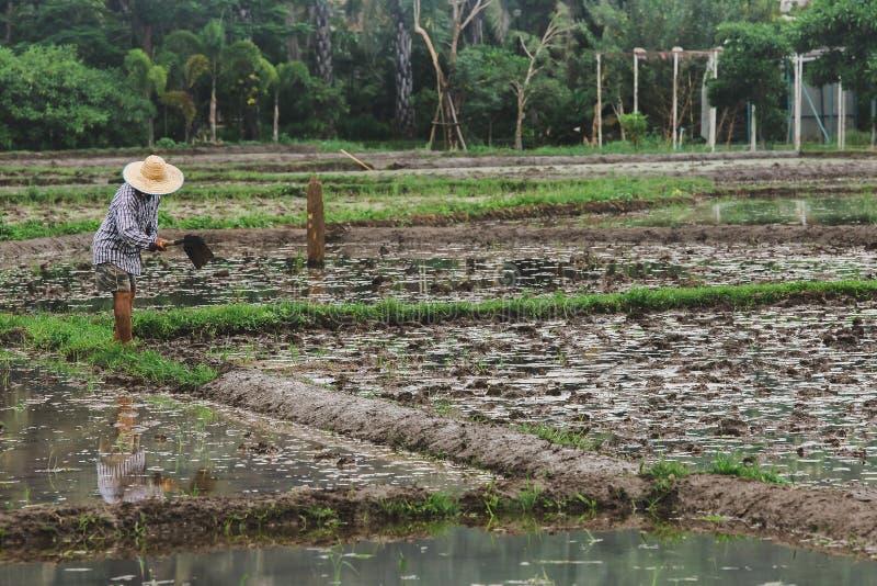 Les agriculteurs creusent le sol image stock