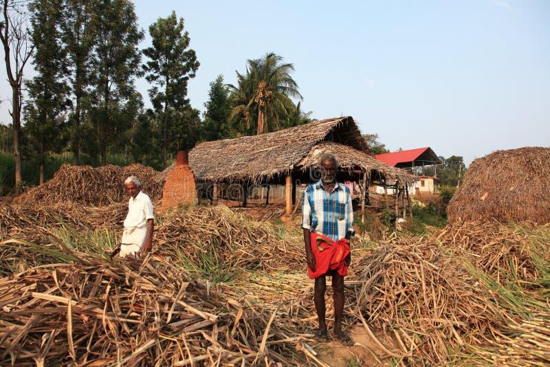Les agriculteurs travaillent dans les champs de canne à sucre photographie stock libre de droits