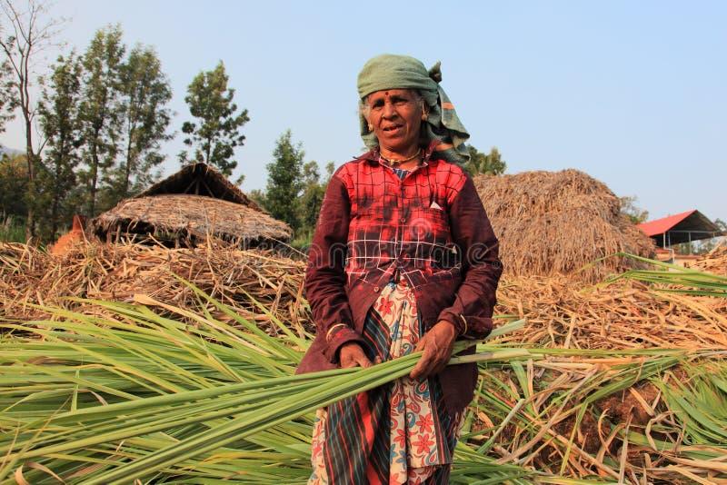 Les agriculteurs travaillent dans les champs de canne à sucre photos libres de droits