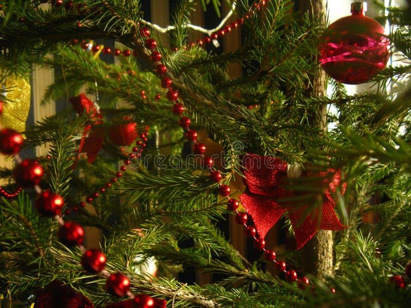 Les aiguilles vert clair vertes se développent sur un vrai arbre de Noël image libre de droits