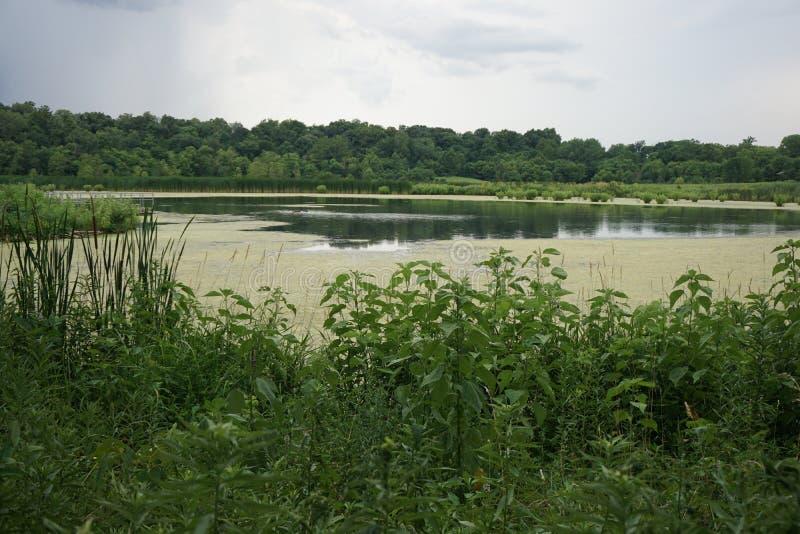 les algues ont couvert l'étang dans Illinios 2016 image stock