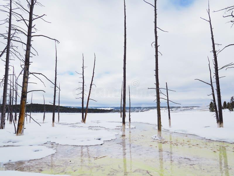 Les algues ont rempli courant en bassin inf?rieur de geyser en parc national de Yellowstone en hiver photos stock