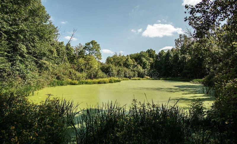 Les algues reculées ont couvert l'étang photo libre de droits