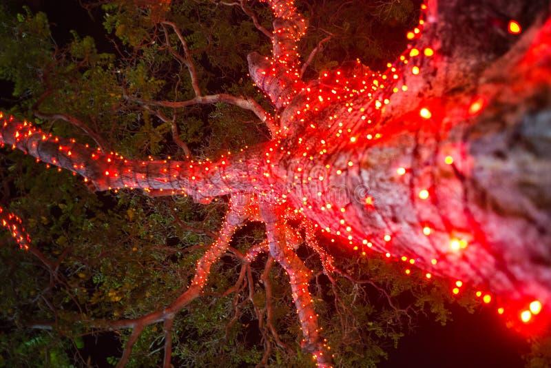 Les ampoules tropicales lumineuses de nuit d'île de lumière d'arbre de Noël détaillent le plan rapproché ci-dessous image stock
