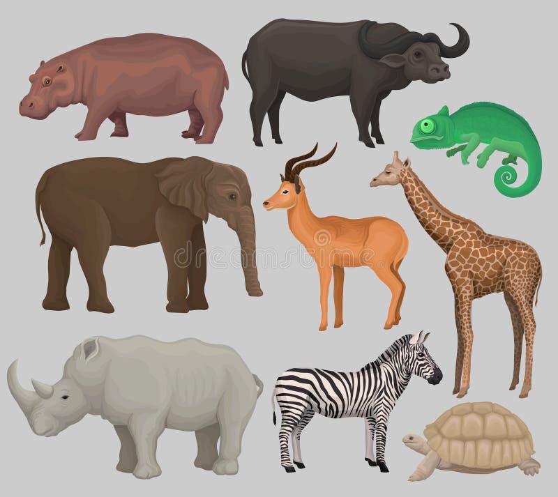 Les animaux africains sauvages ont placé, hippopotame, hippopotame, caméléon, éléphant, antilope, girafe, rhinocéros, tortue illustration de vecteur