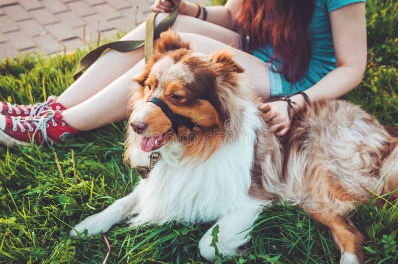 Les animaux familiers roux mignons détendant sur l'herbe verte après long jeu, ont un amusement dehors Jeune fille heureuse de hi photographie stock libre de droits