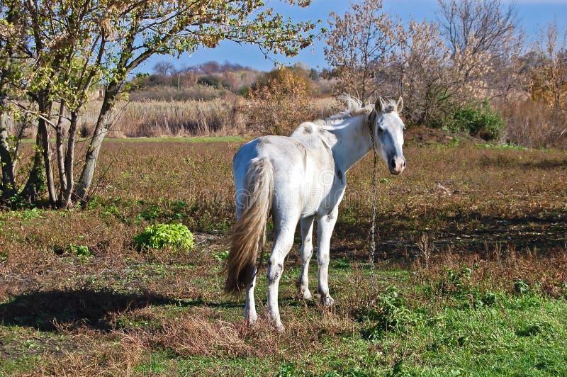 Les animaux familiers sont un attribut intégral de la vie provinciale ukrainienne sur leur terre photos stock