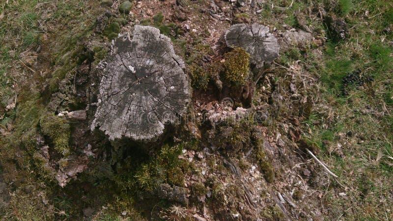 Les anneaux d'un arbre photos libres de droits