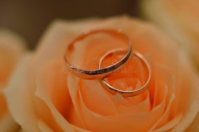 Les anneaux de mariage se trouvent sur le bourgeon rose photographie stock