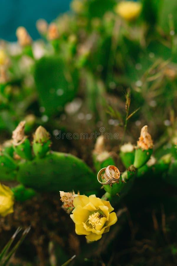 Les anneaux de mariage sur un cactus fleurissant jaunissent des fleurs Jewe de mariage photos libres de droits