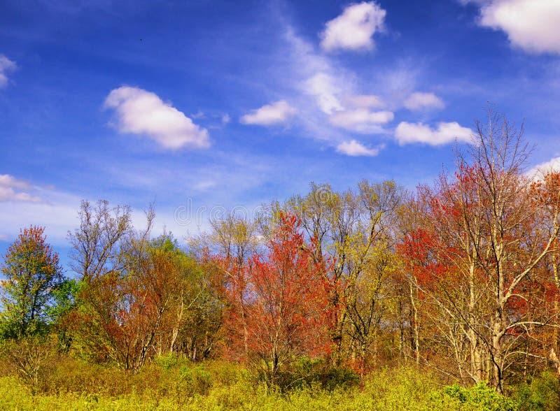 Les arbres à l'intérieur de la région commémorative blanche de nature image stock