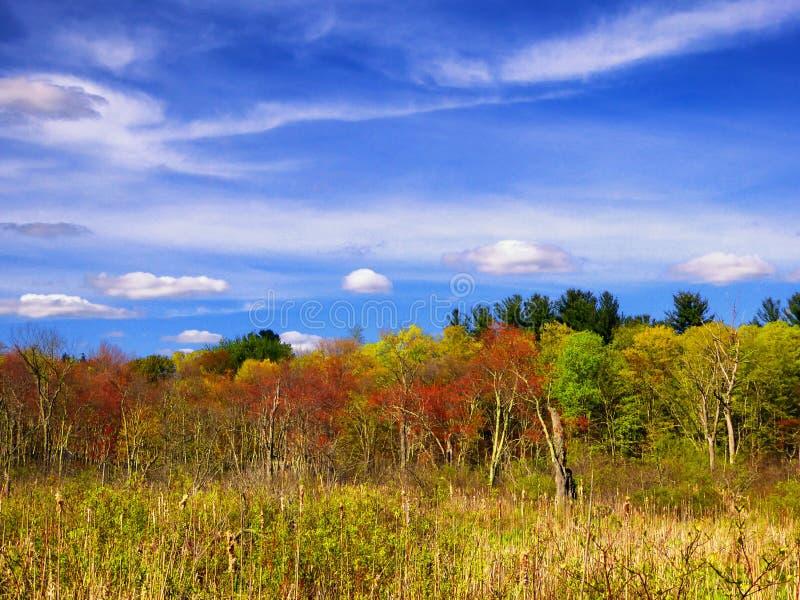 Les arbres à l'intérieur de la région commémorative blanche de nature photo stock