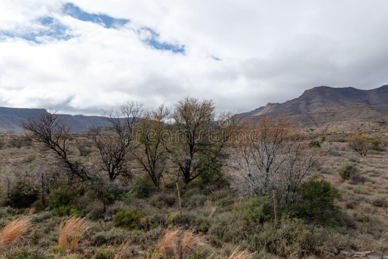 Les arbres élève tout autour - le paysage de Fraserburg photos libres de droits