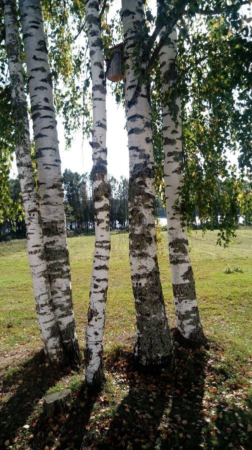 Les arbres photo stock