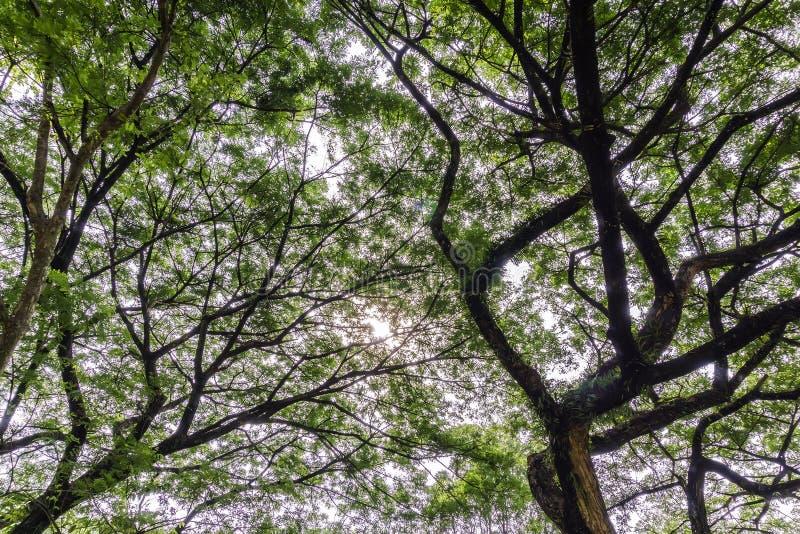 Les arbres image stock