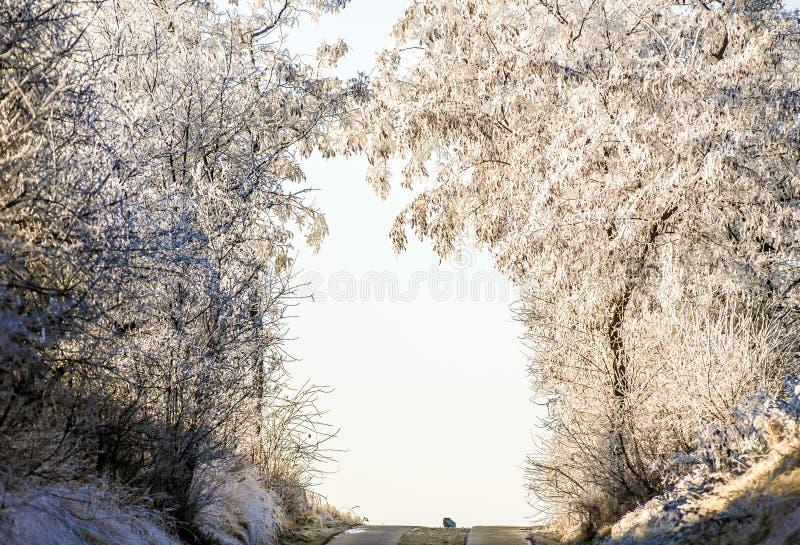 Les arbres congelés décrivent une porte au-dessus de la route photographie stock