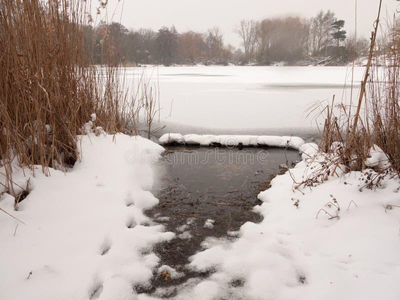 Les arbres congelés de neige d'hiver de surface de lac couvre de chaume l'eau images stock