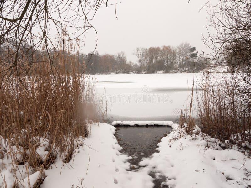Les arbres congelés de neige d'hiver de surface de lac couvre de chaume l'eau image stock