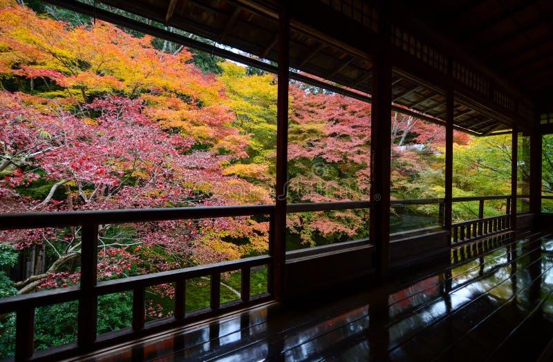 Les arbres d'érable dans la chute colorent vu par les fenêtres japonaises rustiques pendant l'automne image libre de droits