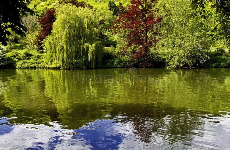 Les arbres d'été se sont reflétés en Tamise à donner un coup de corne photographie stock libre de droits