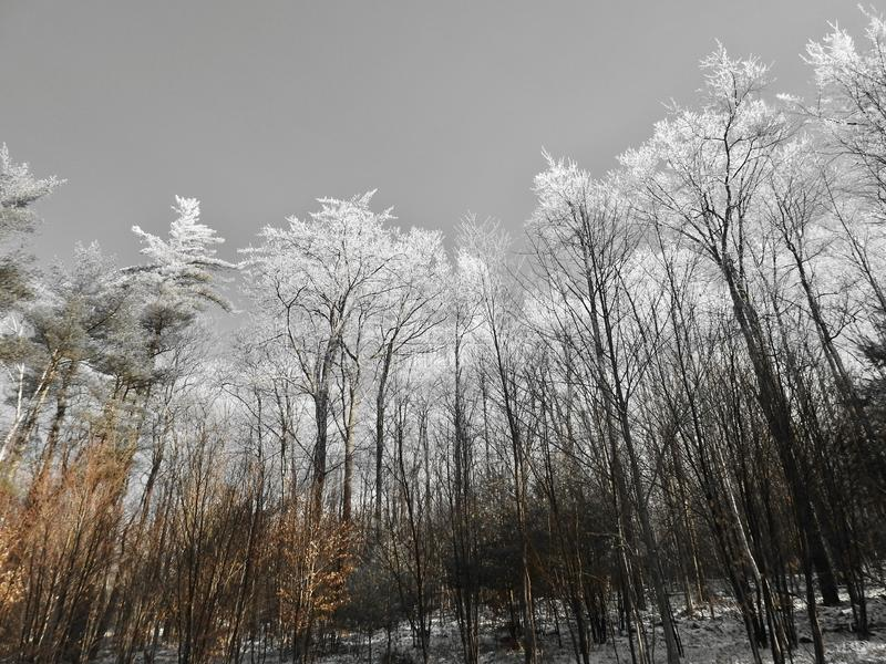 Les arbres d'hiver aux membres glacés le matin image libre de droits