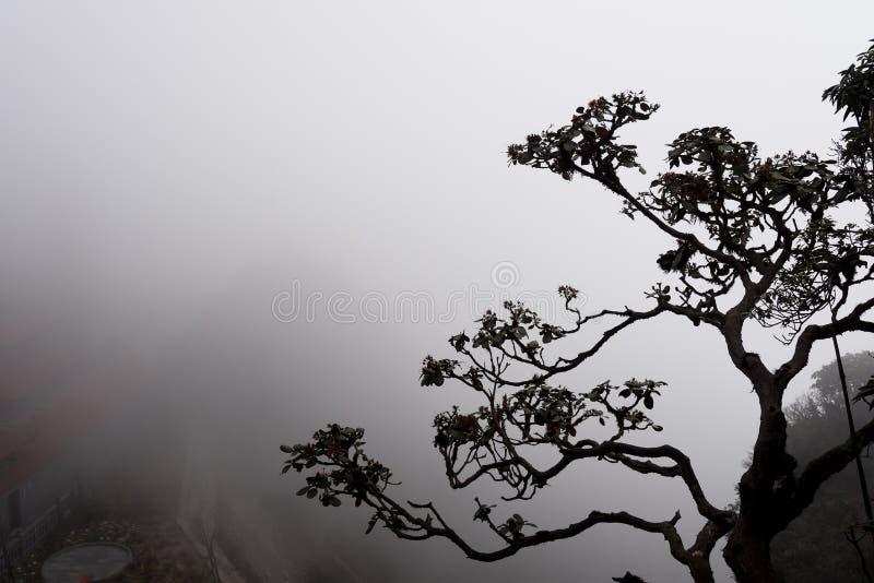 Les arbres dans le brouillard images libres de droits
