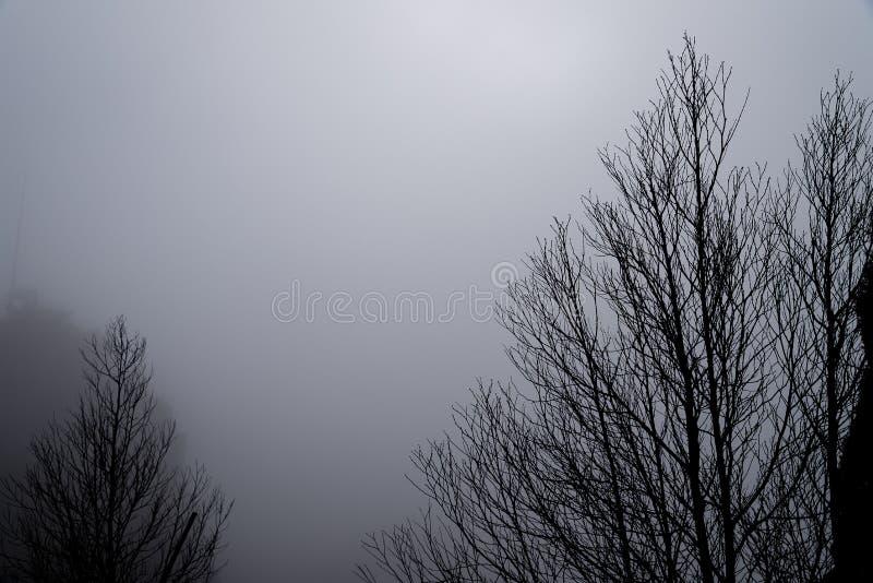 Les arbres dans le brouillard photos libres de droits